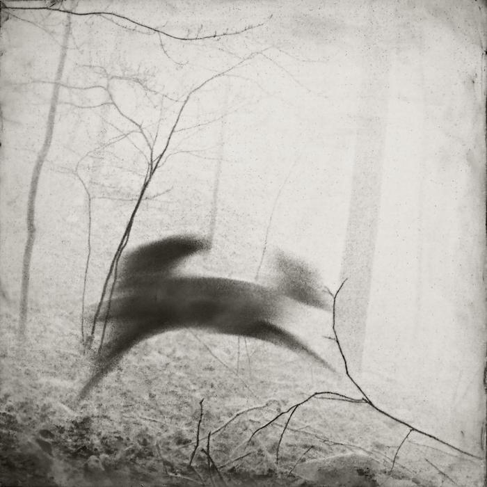 """Jill Skupin Burkholder -   """"Running Deer""""    -  $1200"""