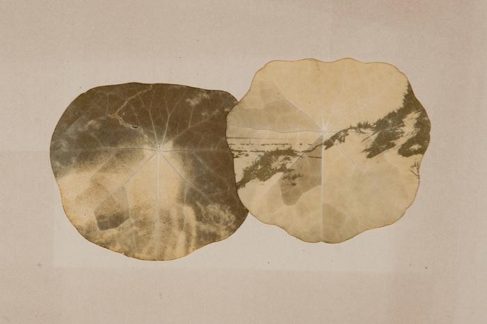 """Odette England-""""Deer, Dunes""""-$1900"""