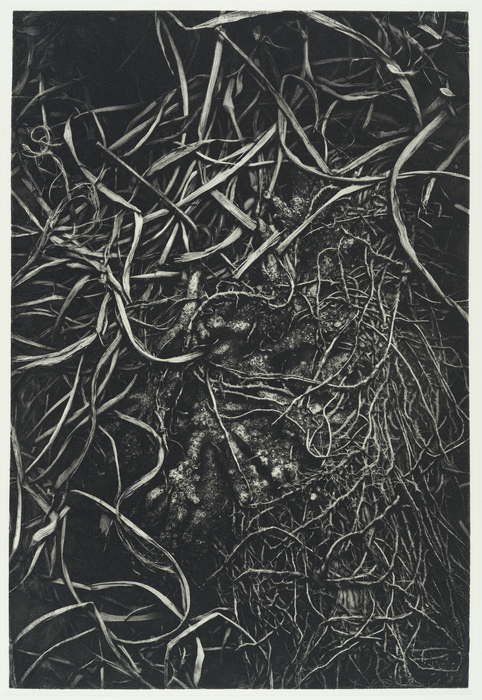 "Richard Hricko   - "" Root I ""   (20""x 15"") -  $800"