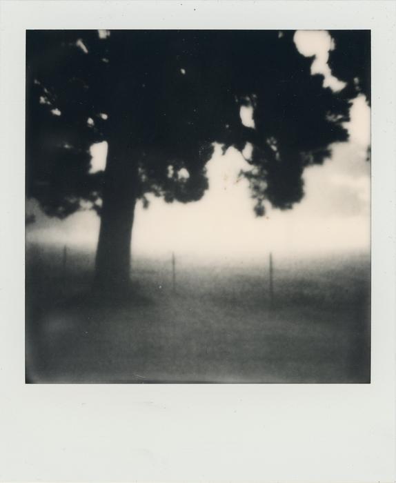 "S. Adam Cook -   Tree in Field -   Polaroid (3"" x 4"")  $500"