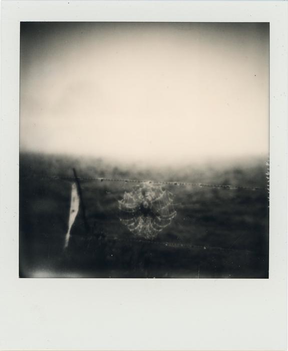 "S. Adam Cook - Web on Fence  -   Polaroid (3"" x 4"")  $500"