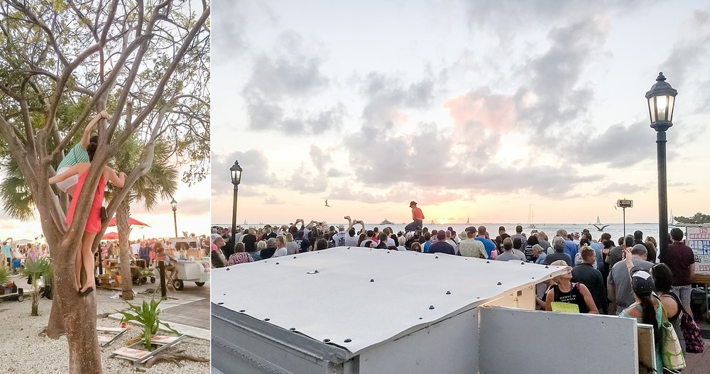 When you can't see the sunset at Mallory Square, just climb a tree!