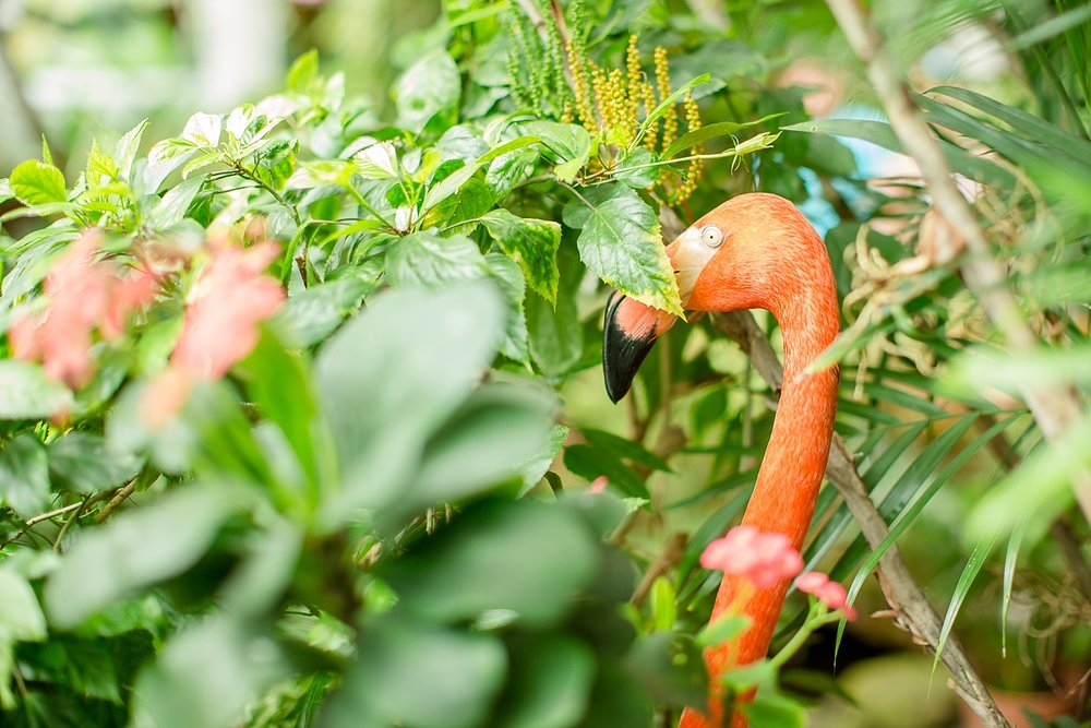 The butterfly conservatory was DEFINITELY worth it especially because this gentleman flamingo was there!
