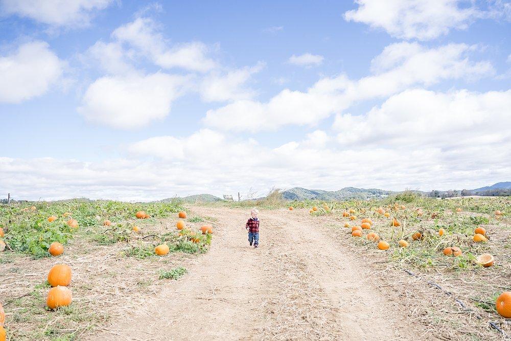pumpkin-patch-blacksburg-va_0141.jpg