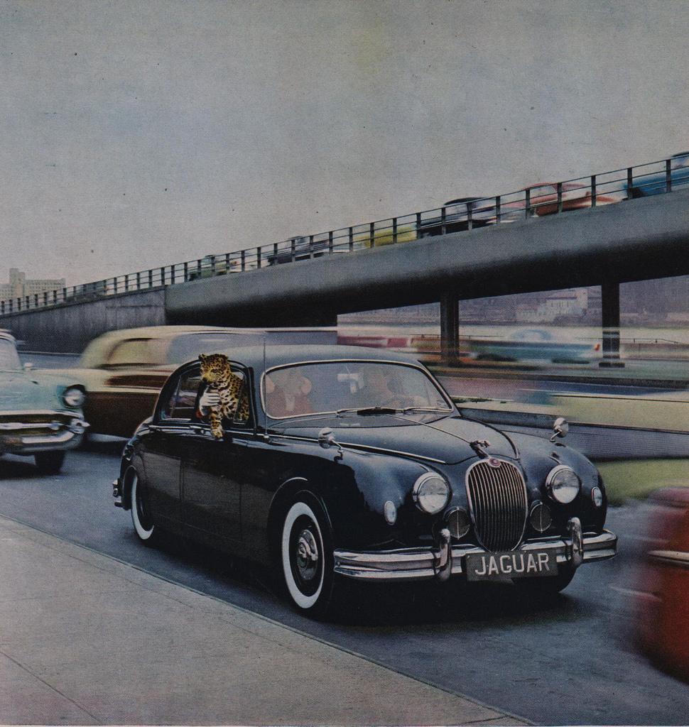 TunnelRam_Jaguar (1).jpeg