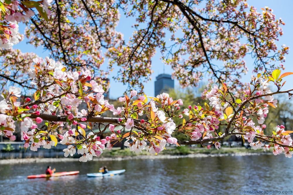 Charles River, Back Bay Boston