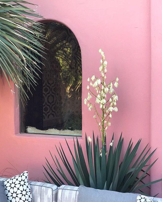 #plantsonpink at @sandshotelspa /// #TSBclient