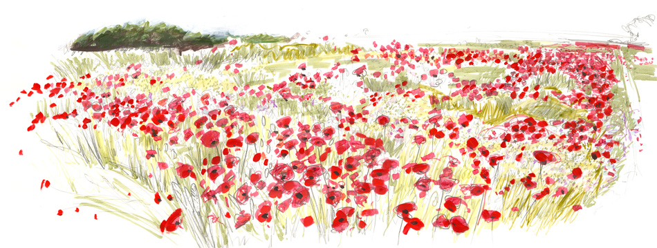 Poppies at Morcott: Jane Hidmarch