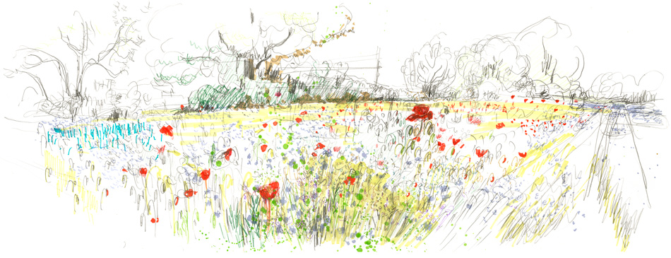 Early Poppies: Maxine Greer