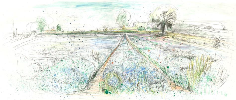 Flax Field: Maxine Greer