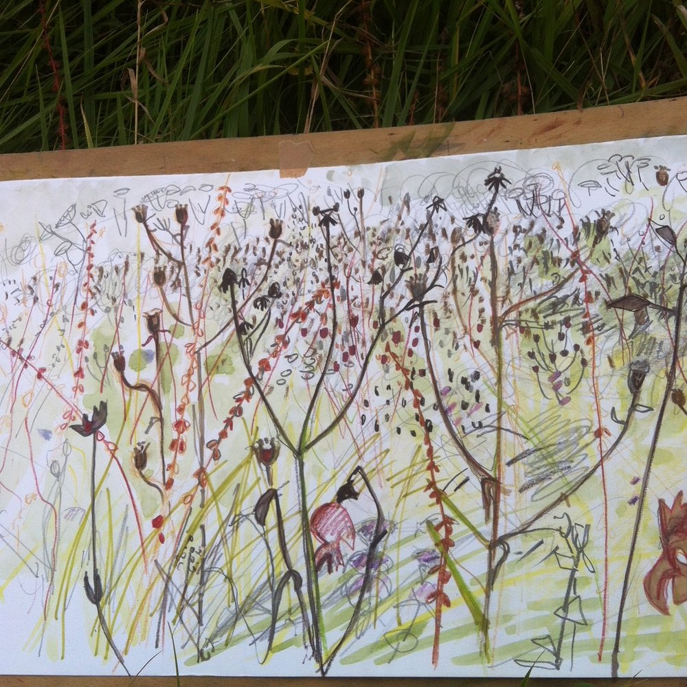 Seed Heads Maxine Greer detail