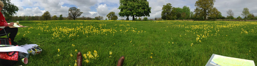 Sketching Cowslips in Uffington.