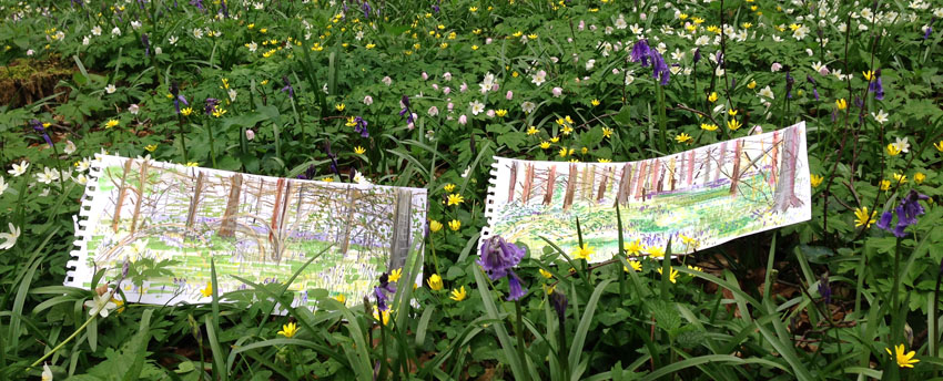 Bluebell sketches by Maxine Greer