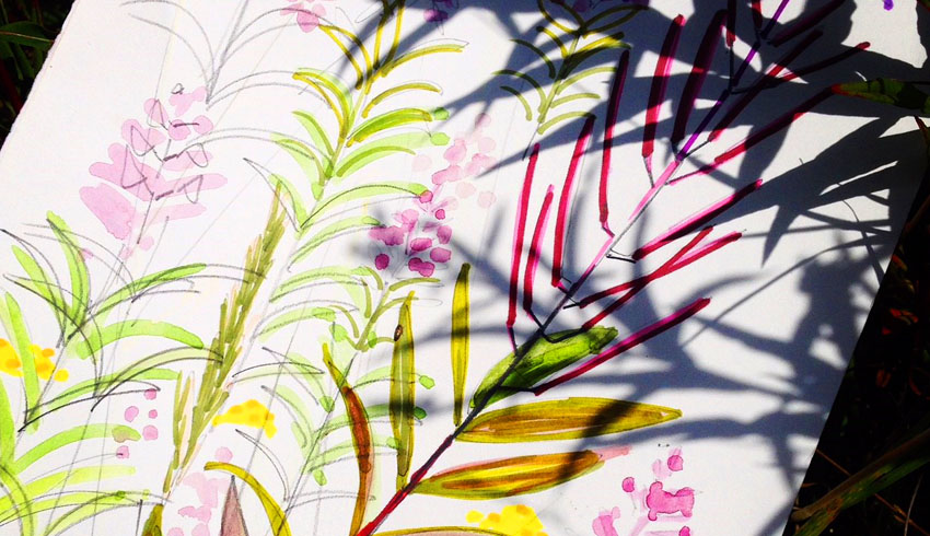 Rosebay Willowherb sketch detail by Jane Hindmarch