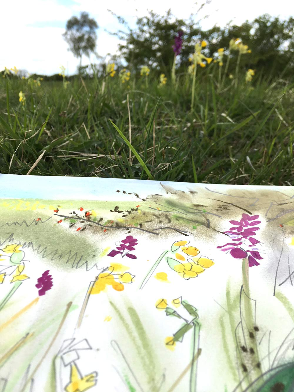 Cowslips and Early Pink Orchid: Jane Hindmarch