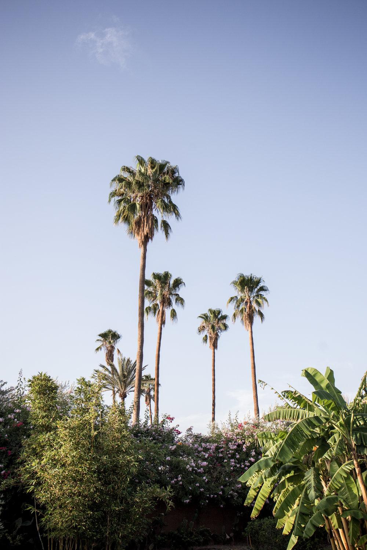 Marrakech - clairemenary.com-2315.jpg