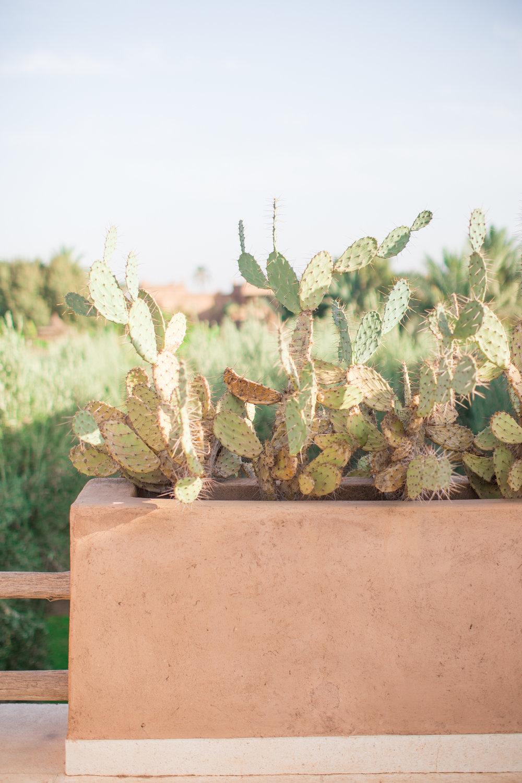 Marrakech - clairemenary.com-2346.jpg