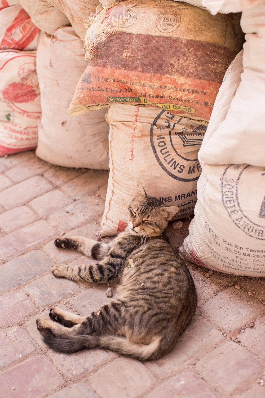 Marrakech  - clairemenary.com-2623.jpg
