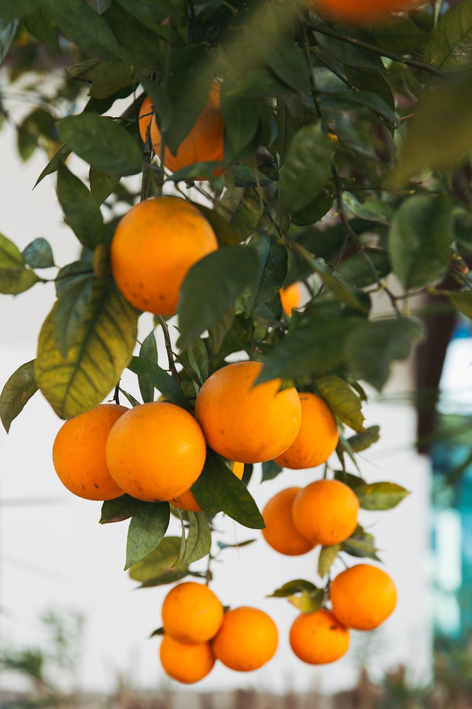 Portugal - clairemenary.com-9842.jpg