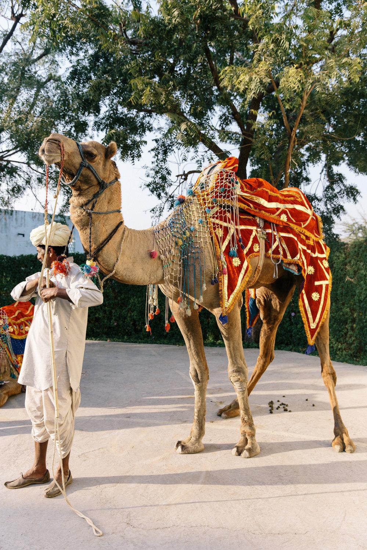 India-9863.jpg