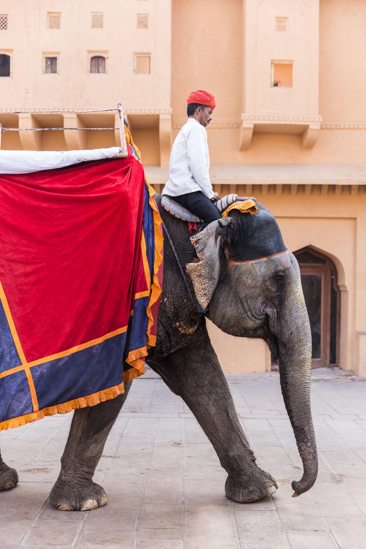 India-8962.jpg