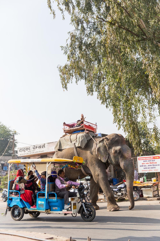 india-8983.jpg