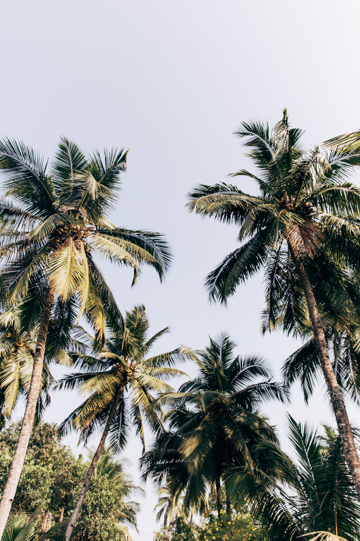Goa-0202.jpg
