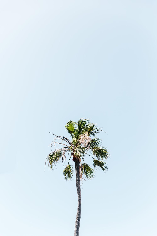 california-.jpg