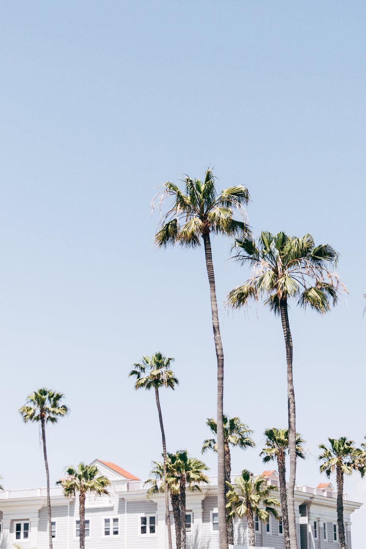 california-9390.jpg