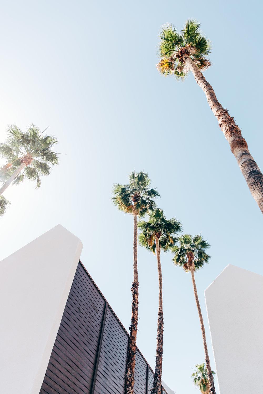 california-9798.jpg