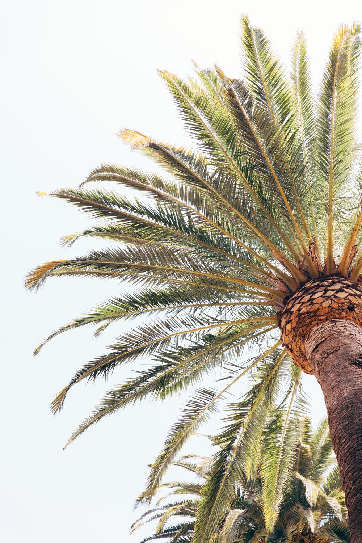 california-0604.jpg