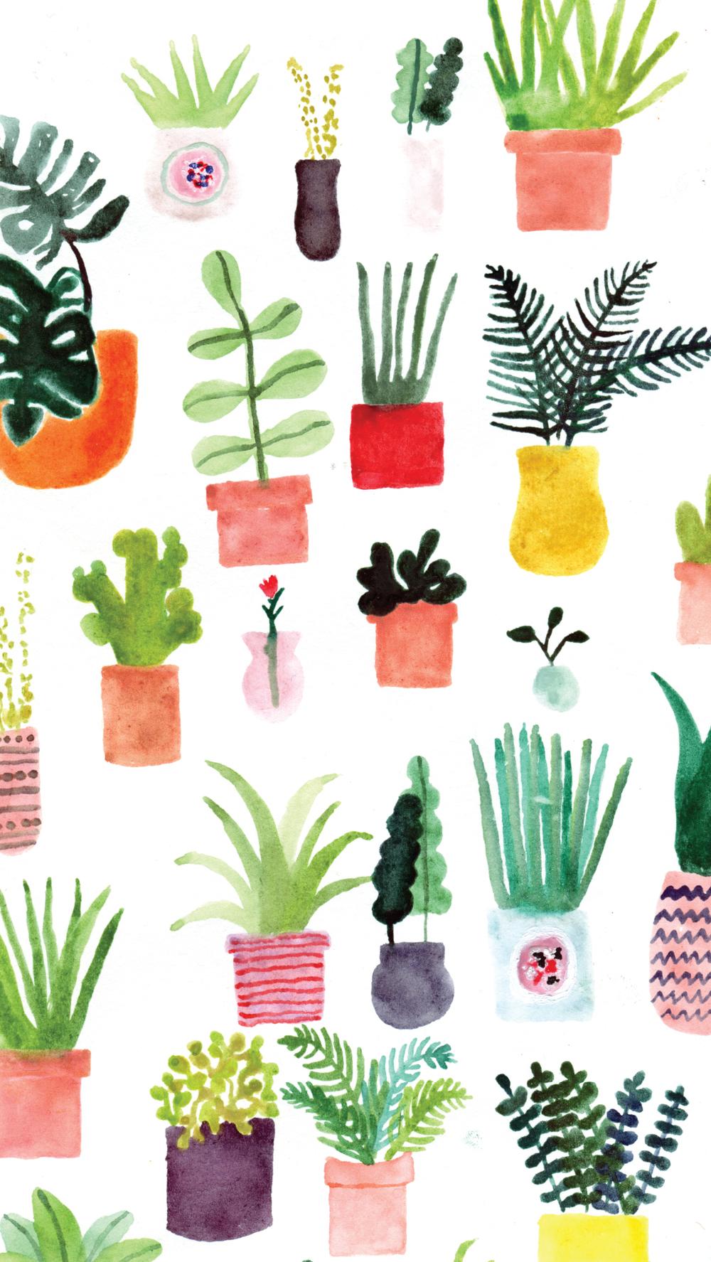 allie-newman_plants_mobile