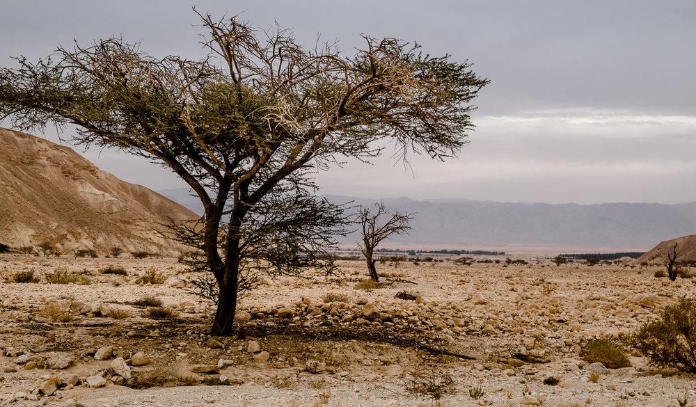 my desert site-6051.jpg