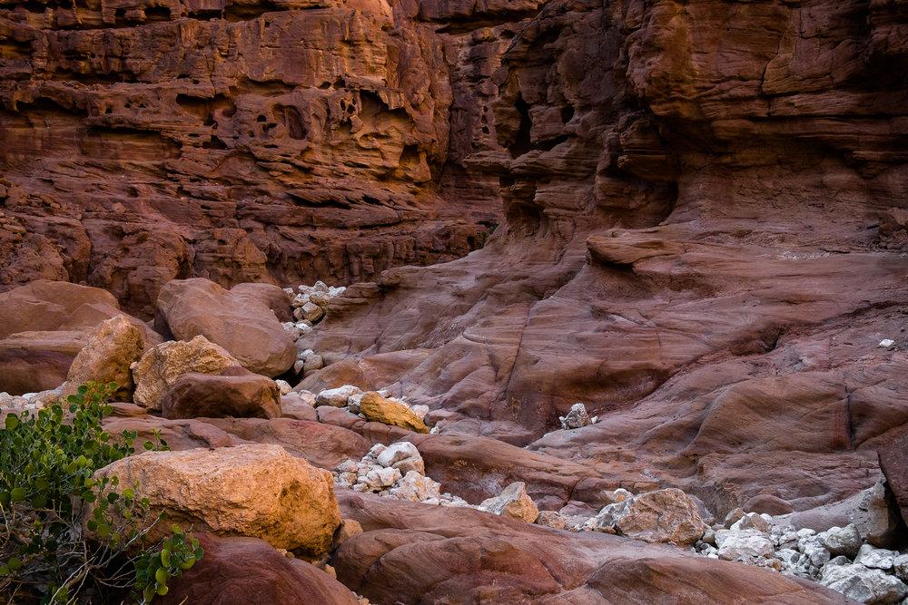 my desert site-1152.jpg