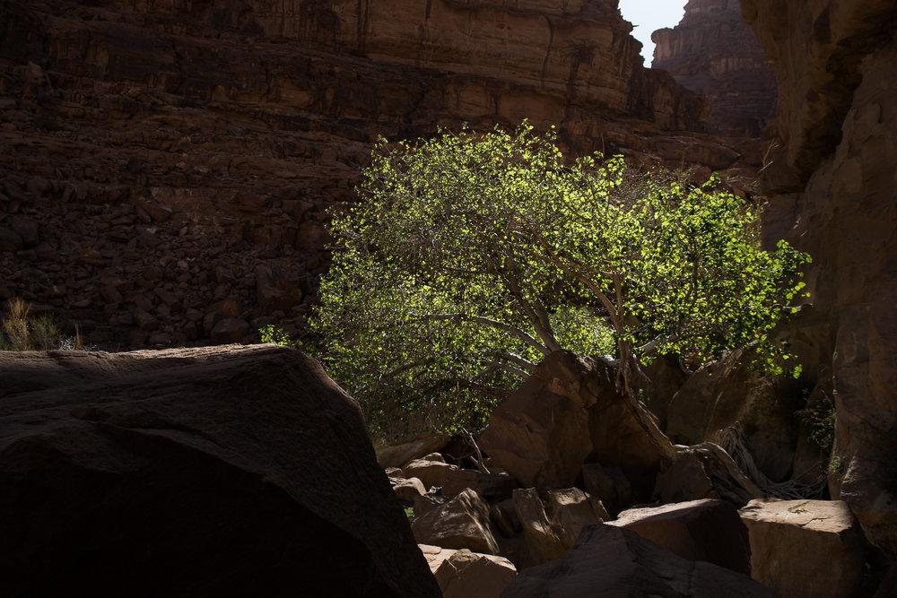 my desert site-9024.jpg