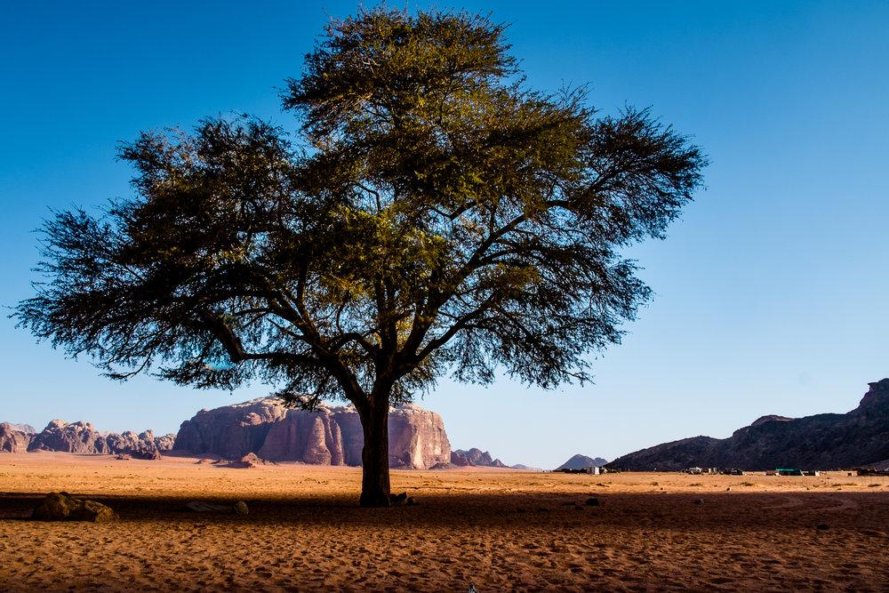 my desert site-9083.jpg