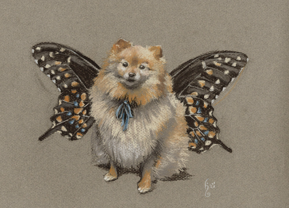 Teddy-butterfly.jpg