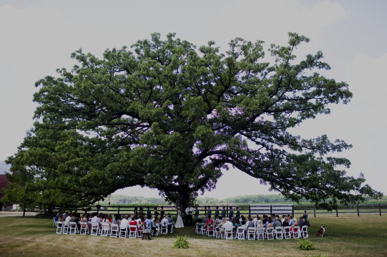 The majestic oak.