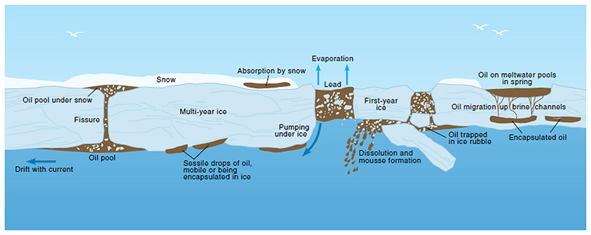 Figure 3: The Arctic Monitoring and Assessment Program (AMAP) 'Arctic Oil and Gas 2007'