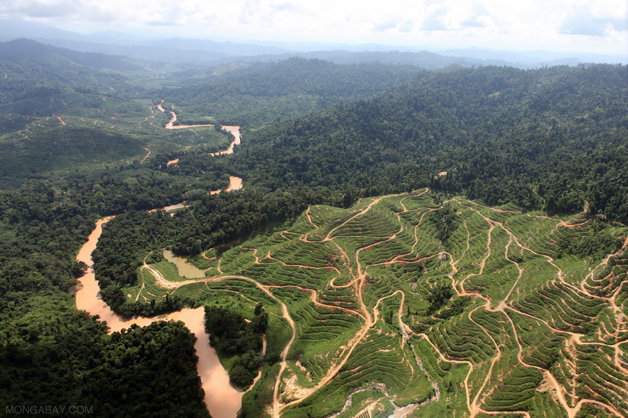 Deforestation caused by palm oil plantations