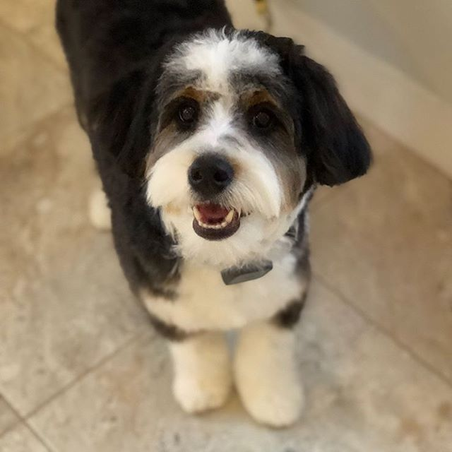 Cooper's first groom!