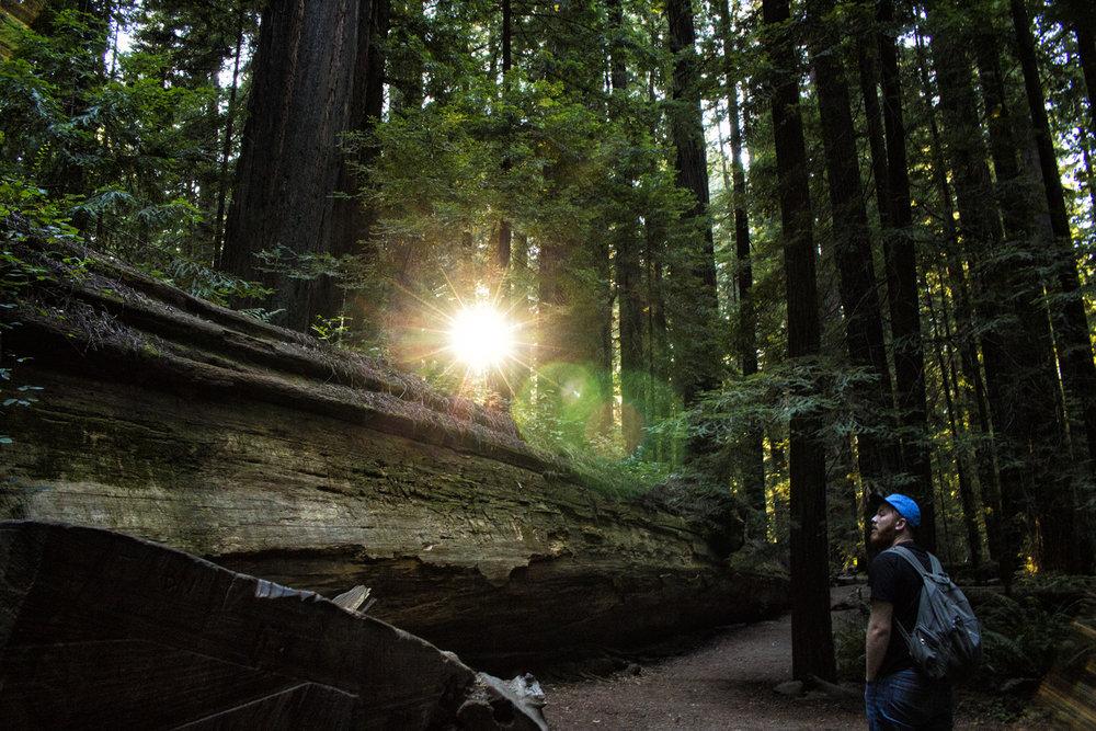 glareforest.jpg