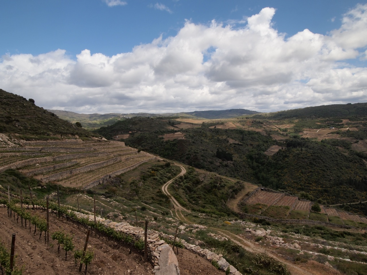 Vineyards in the Bibei Valley of Valdeorras. Notice how many new vineyard plots are being carved out.