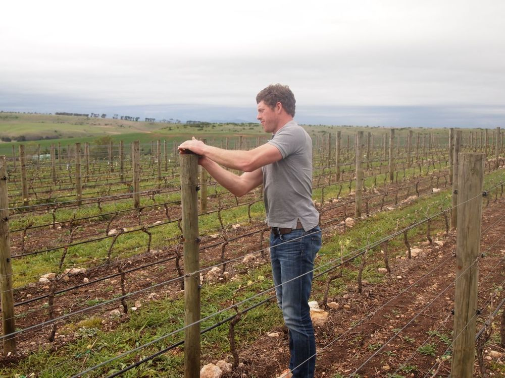 Nick Farr in the vineyards