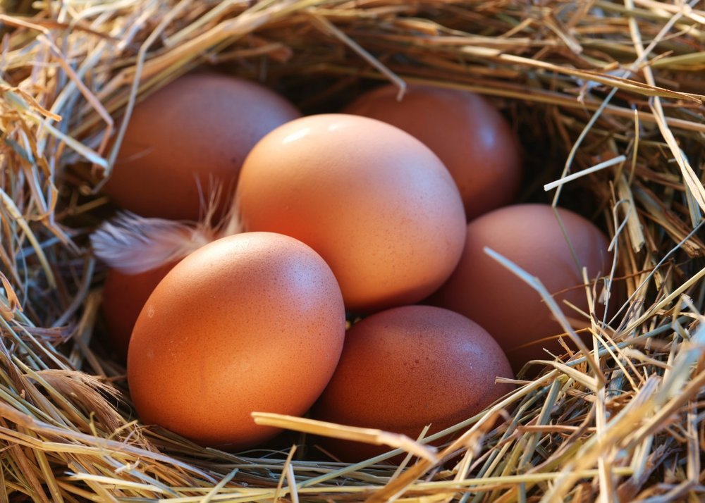 eggs-in-nest-close-up.jpg