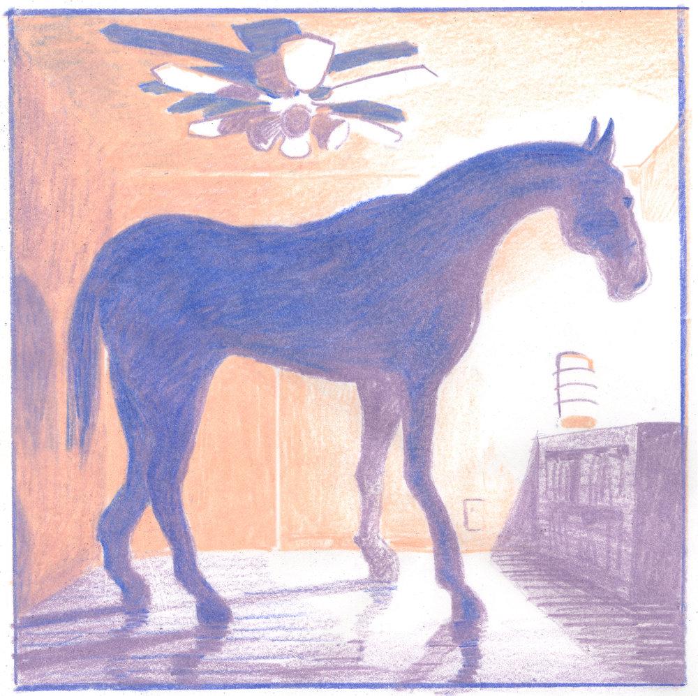 horseweb.jpg
