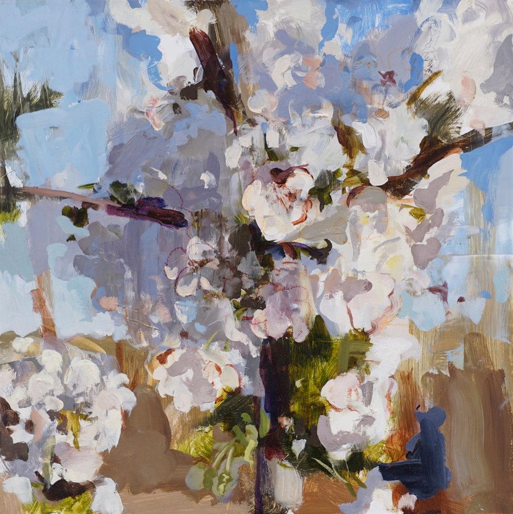 mark crenshaw cherry blossom