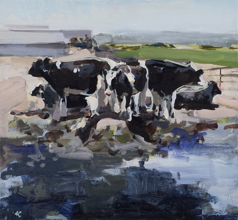 cows in water with outline