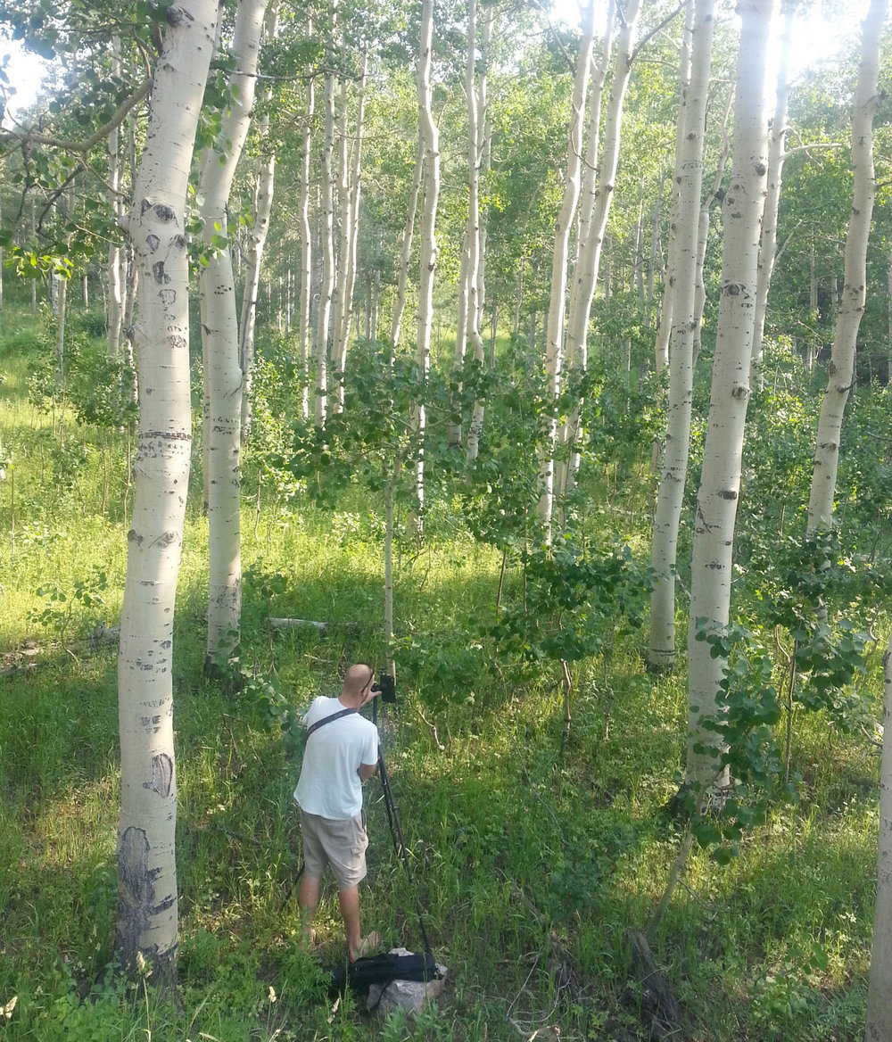 mark-crenshaw-in-aspens.jpg