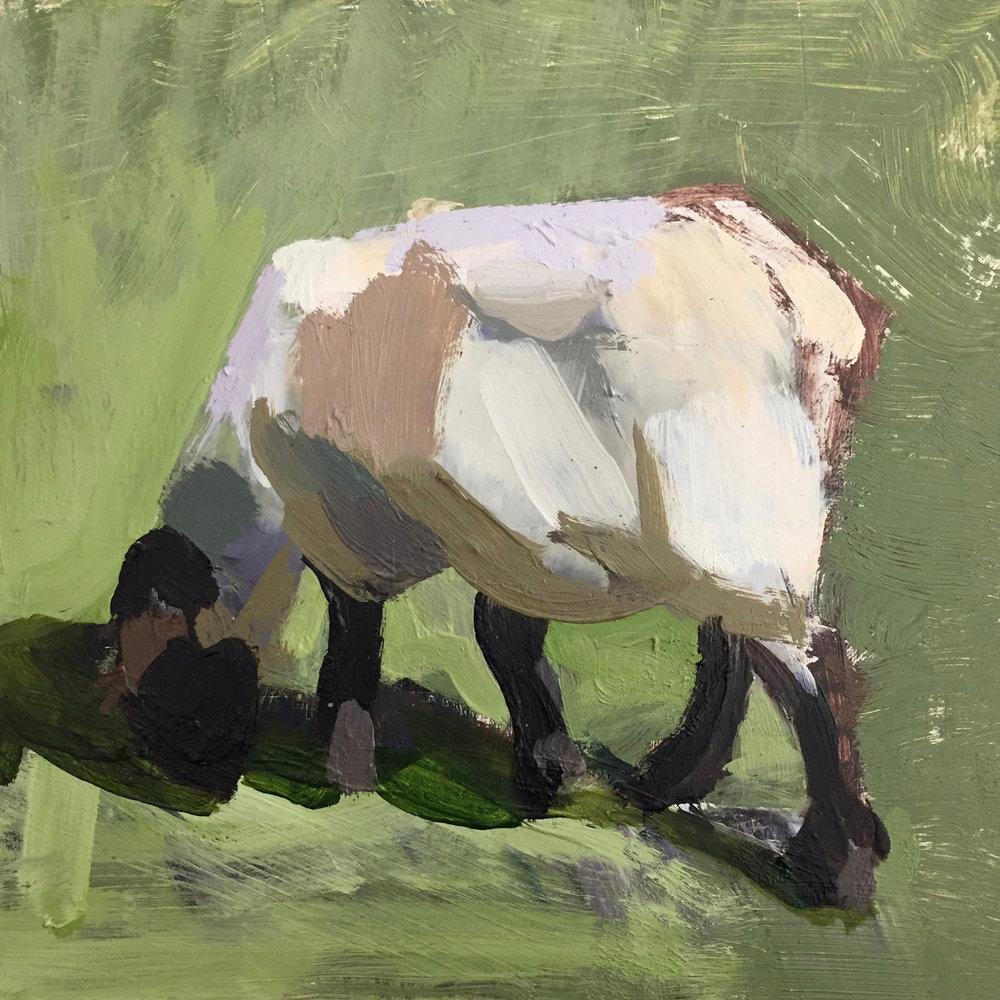 mark-crenshaw-17099-mark-favorite-sheep-eating-grass.jpg